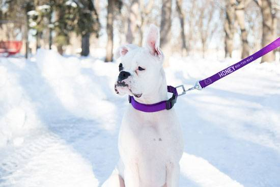 Bella Pet Store How to Choose the Best Leash for Your Dog? https://bellapetstore.com/how-to-choose-the-best-leash-for-your-dog/