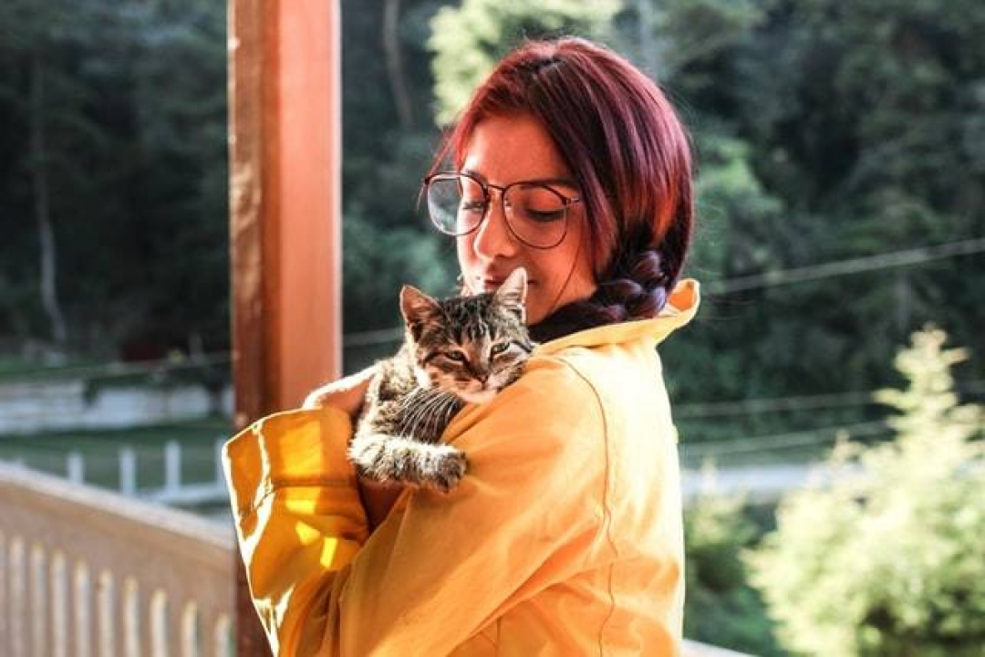 Bella Pet Store How to Properly Pick Up a Cat? https://bellapetstore.com/how-to-properly-pick-up-a-cat/