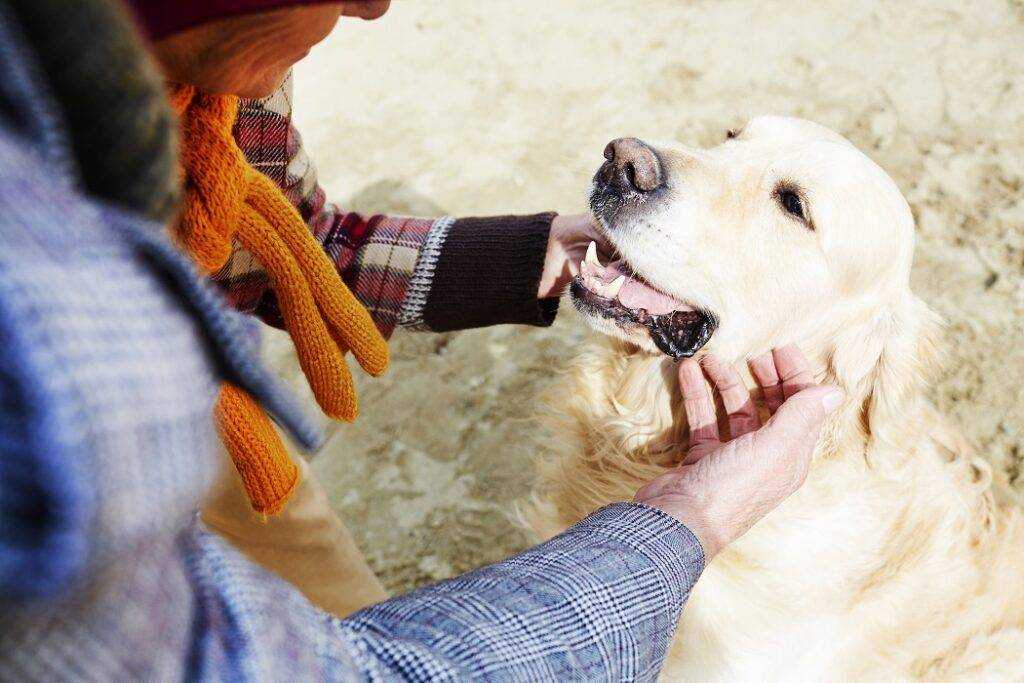 How Do Dogs Know Their Name?